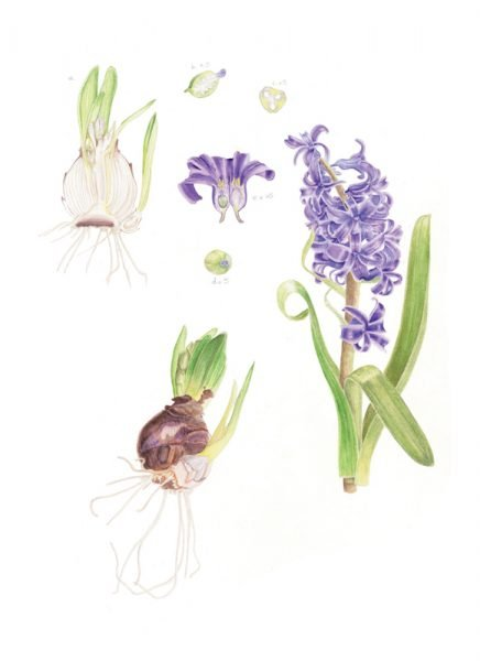 Distance Learning Diploma Course - Society of Botanical Artists