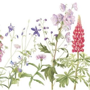 Wild flowers for Botanical Garden 2014