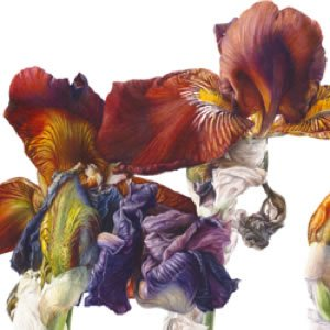 Flowers for In Pursuit Of Plants 2015
