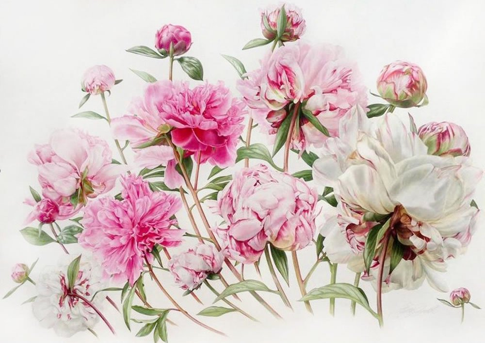 Showell Billy Passion for Peonies1