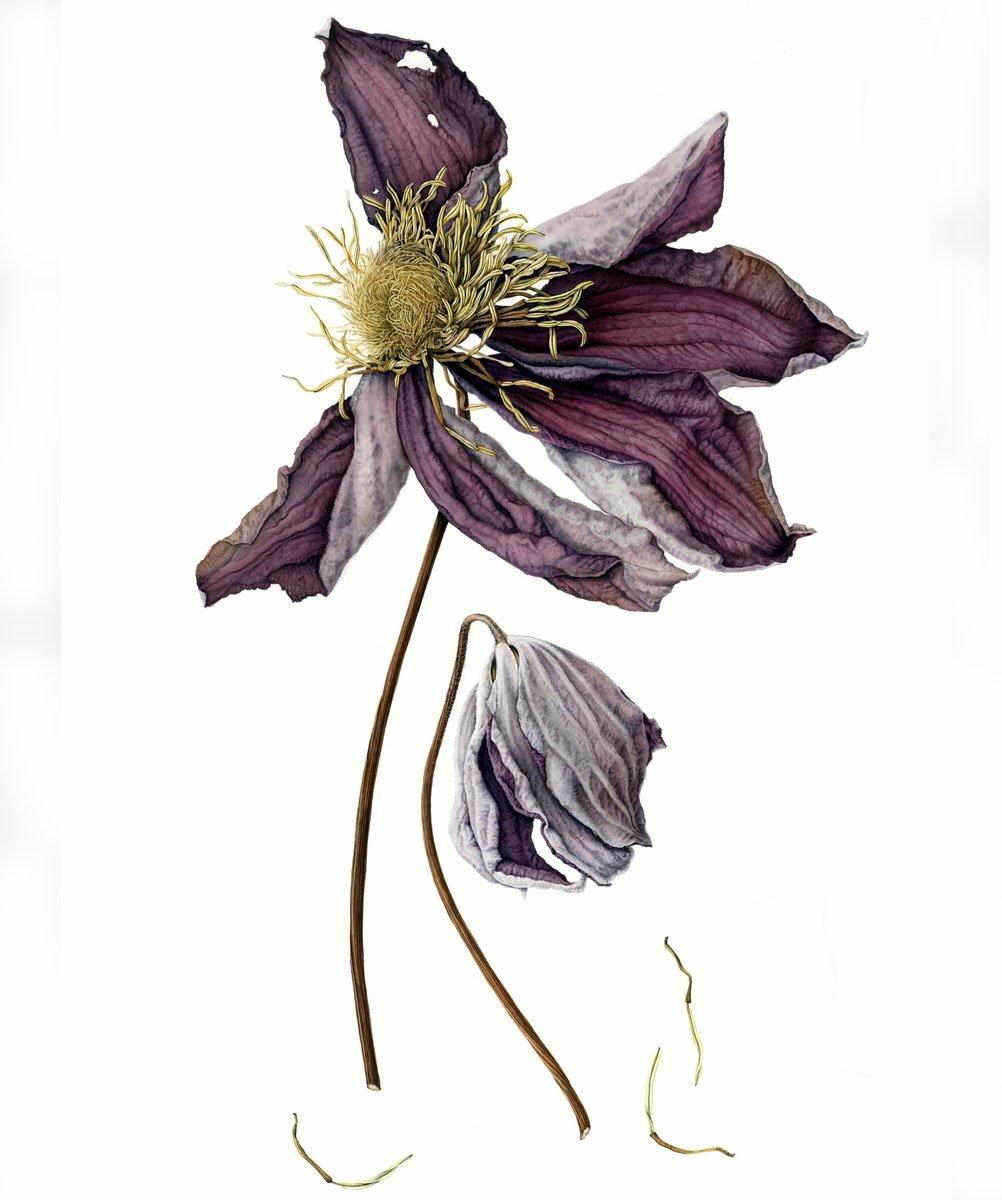 Julia Trickey Society Of Botanical Artists